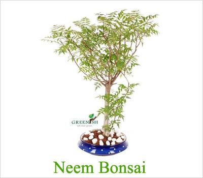 neembonsai
